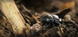 Visitor in the forest floor by NoviceOfAnimation