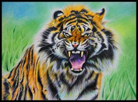 Angry tiger face in Colour Pencil by a6-k