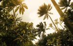 Fijian Afternoon by SxyfrG