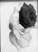 rose in black n white by pure-rules