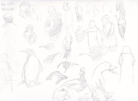 gestures birds by apcMurray