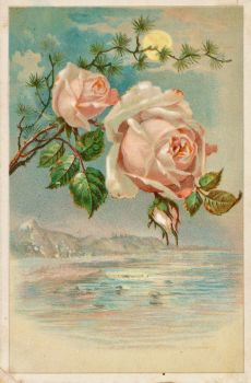 Victorian Advertising - My Fairest Rose by Yesterdays-Paper