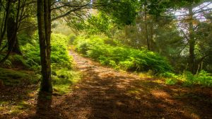 Into The Woods by bongaloid