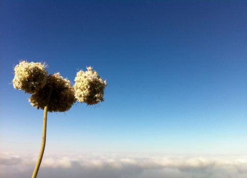 Buckwheat in the Clouds2 by CraveTheWave