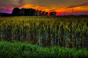 Burning Field by MartinJP