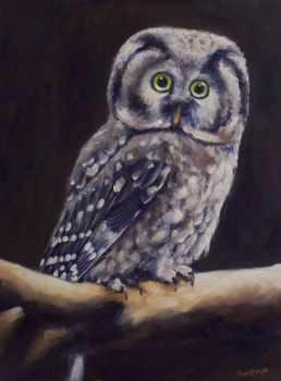Owl by mp2015
