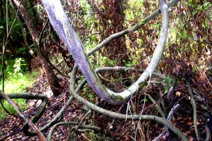 Zig Zagged Vines by Bluegalleon