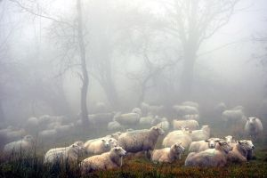 Sheepwalk by tomsumartin