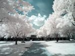 Infrared XV by ilimel
