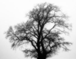 The tree from nowhere by Thestrayartist
