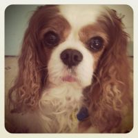 ~Sick Timmy the Cavalier~ by Belynx16