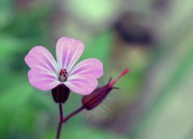 bokeh-ish Flower by priwax