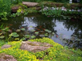 Pond 8 by B-SquaredStock