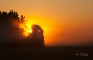 Sun Sets Behind The Trees by JoniNiemela