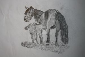 Horses in Graphite by Mikla-9