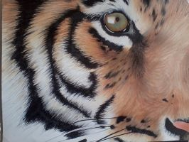 tiger eye in markers by angelfaces1986