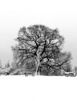 Winter Tree by skullsdirect