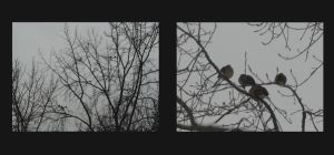 birds+trees by imaginary-wings