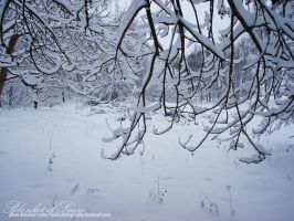 Blanket of Snow by JDLuxe