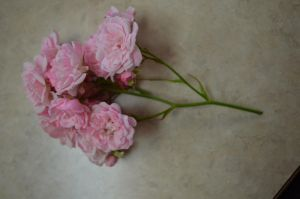 Pale Pink 5 by RachgracehStock