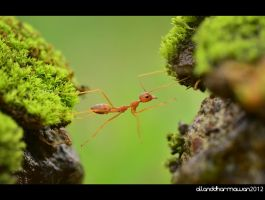 Trying Hard by allanddharmawan