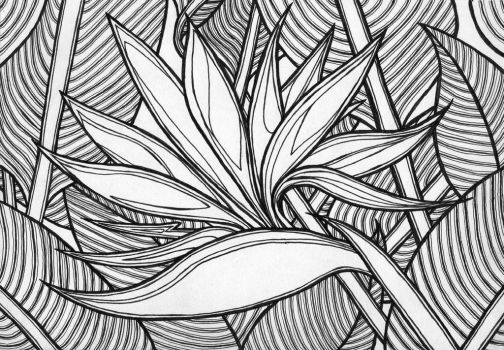Birds of Paradise coloring book page by ambercamiart