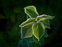 Frost on green by eswendel