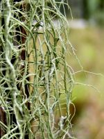 Raindrops and Lichen by Dontheunsane