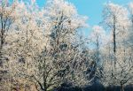 Frost Of The Morning Sun by Vividlens