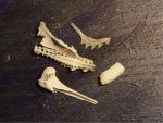 Animal Bones by Treeclimber-Stock