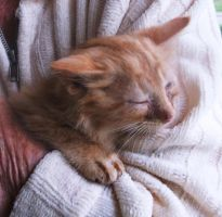 Indoor kitty at last! Cuddles in my mother's arms by MystMoonstruck