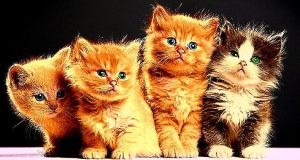 The Familly Of Meow by YOKOKY