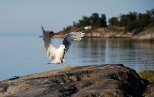 Seagull by emshh