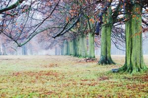 Trees in the fog by EmmaJPhotography