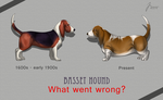 Basset Hound development by t1sk1jukka