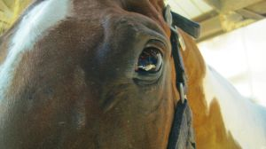 Eye Of The Horse. by Sparkle-Photography