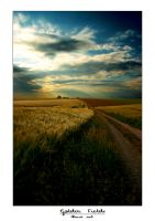 Golden Fields by Snert