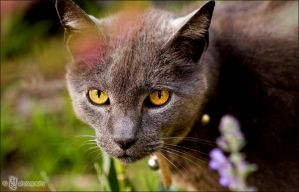 Wild Cat by ILTBY