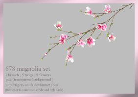 678 Magnolia Set by Tigers-stock