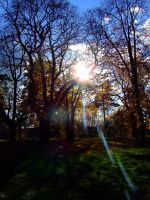 tree vs sun by Cab-GdL
