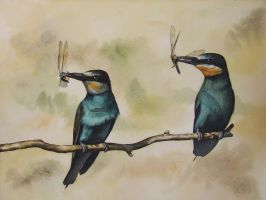 bee-eaters by jennomat