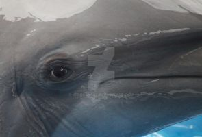 Eye of the Dolphin by kfrosty008