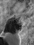 Watching the rain... by LoveSumer
