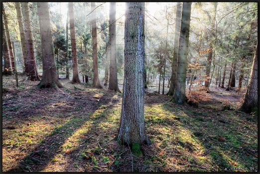 Sunlit Trees. by Exparte-se