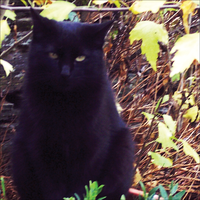 a black cat and the autumn quietly deepened by ruiManuelR
