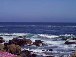 By the Sea in Monterey by moonduster