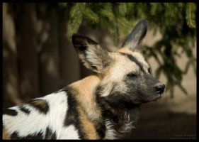 painted dog by morho