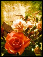 Vintage Roses by Forestina-Fotos