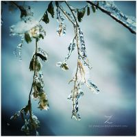 :frozen leaves: by zvaella