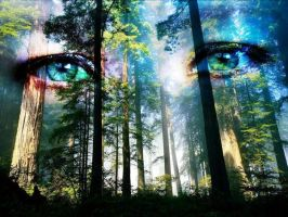Eyes of the Forest by grimwolf